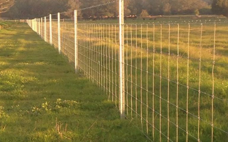 Cattle Fencing Project In Gingin Western Australia Get