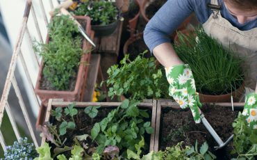 Why you need a balcony garden